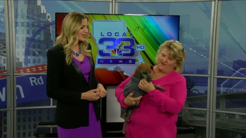 Pet Adoption Jan- 27_20160127133304