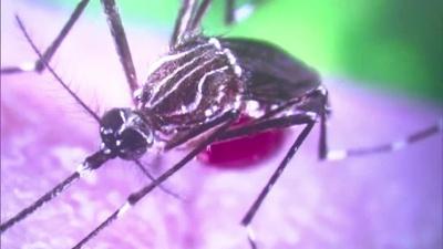 Zika-mosquito_20160203141316-159532