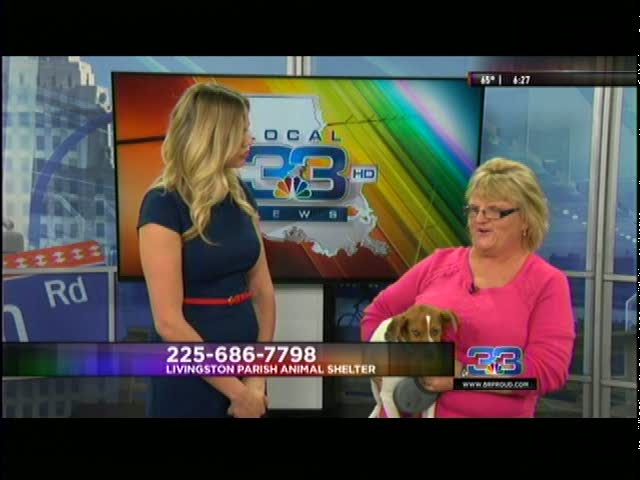 Pet Adoption_20160308135807