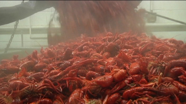 crawfish_1451338440765_6154245_ver1.0_640_360_1458937682217.jpg