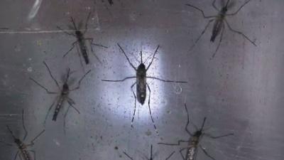 Zika-jpg_20160714181720-159532