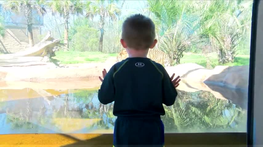 Petition pushes for federal investigation into the BR zoo_63642418-159532