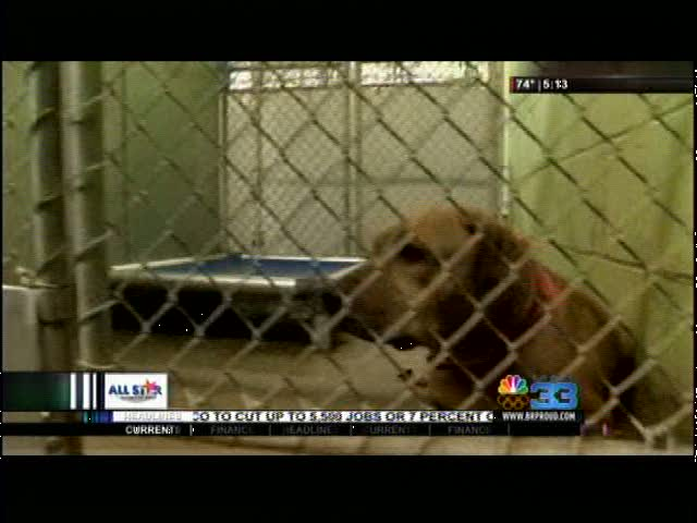 animal rescue efforts package_27066930-159532