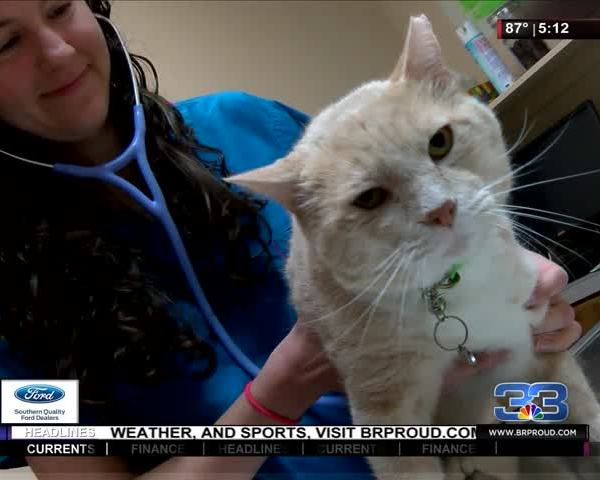 Could Your Cat be Putting You in Danger-_89692407-159532
