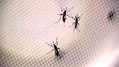 Zika-mosquitos-not-for-media-gallery-JPG_20160917071703-159532