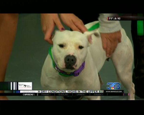 pet adoption meet Kayla