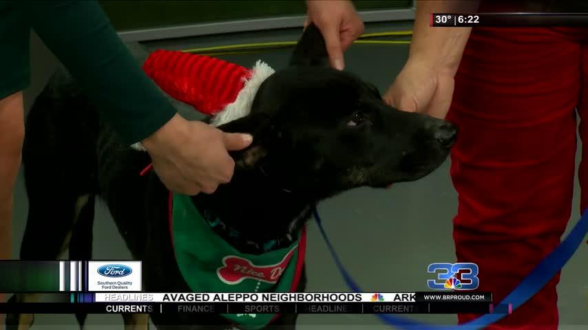 Pet Adoption: Meet Sam