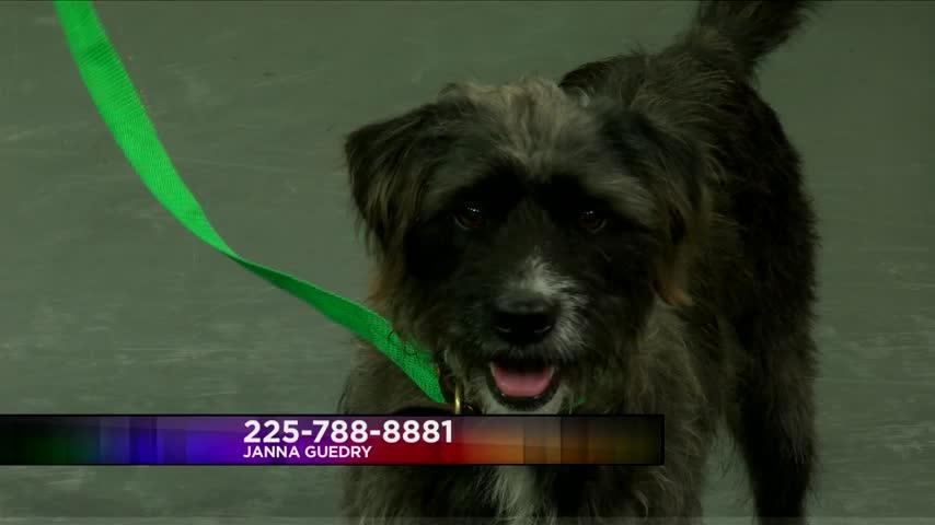 Pet Adoption: Meet Gidget