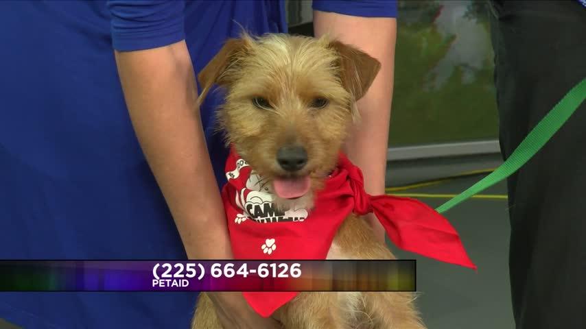 Pet Adoption: Meet Benjamin