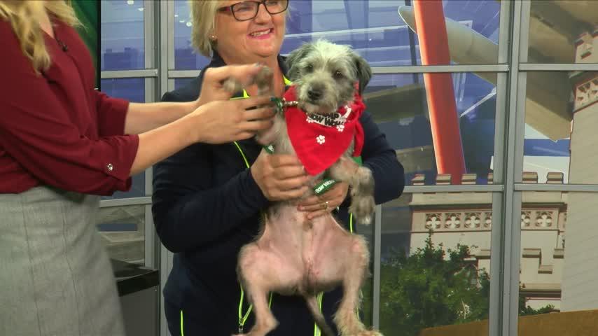 Pet Adoption: Meet Petey