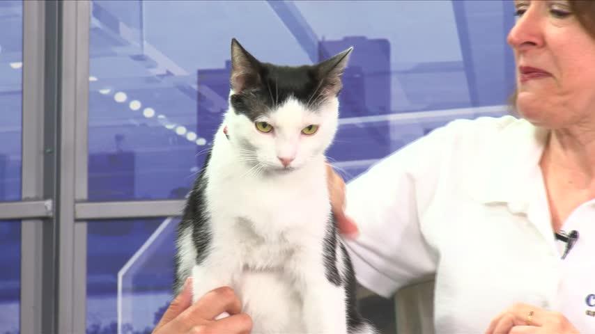 Cat Haven: Meet Chee Chee