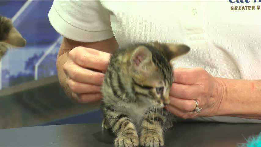 Cat Haven: Meet Calvin and Hobbes
