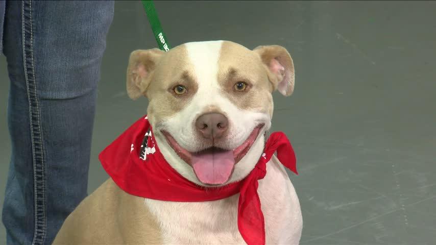 Pet Adoption: Meet Hyatai