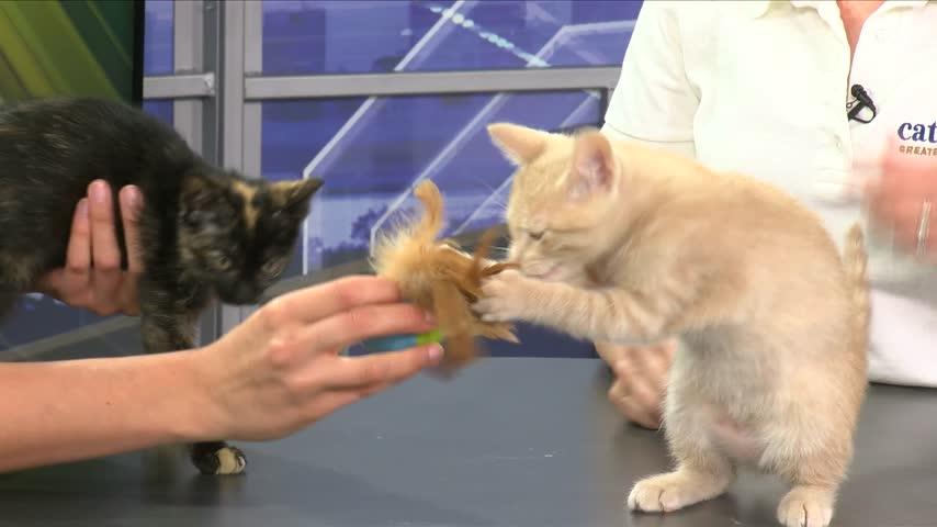 Cat Adoption with Cat Haven: Mocha & Marco