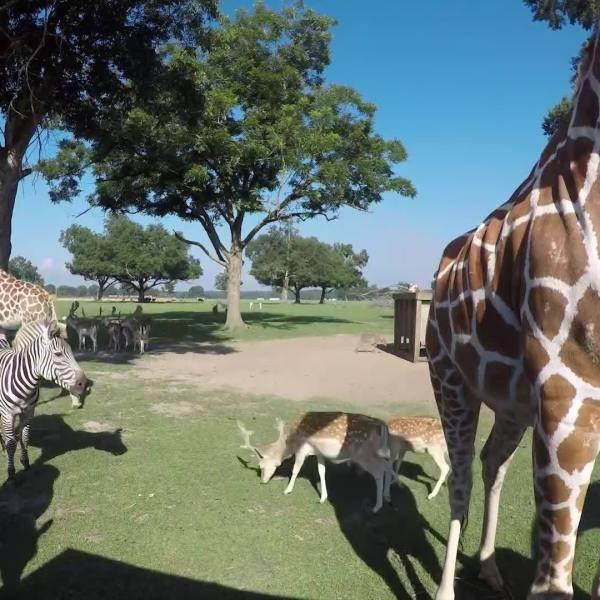 Global Wildlife Center - Safari Tour