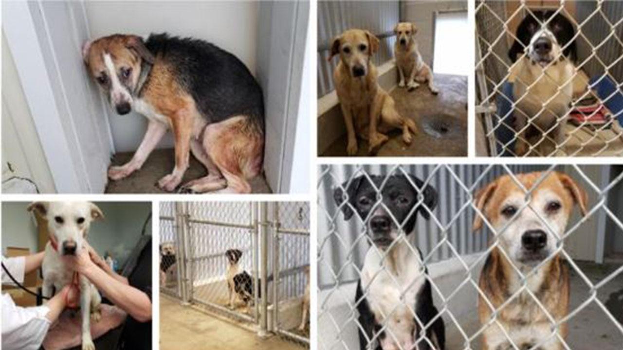 Animal Shelter_1548254717139.JPG.jpg