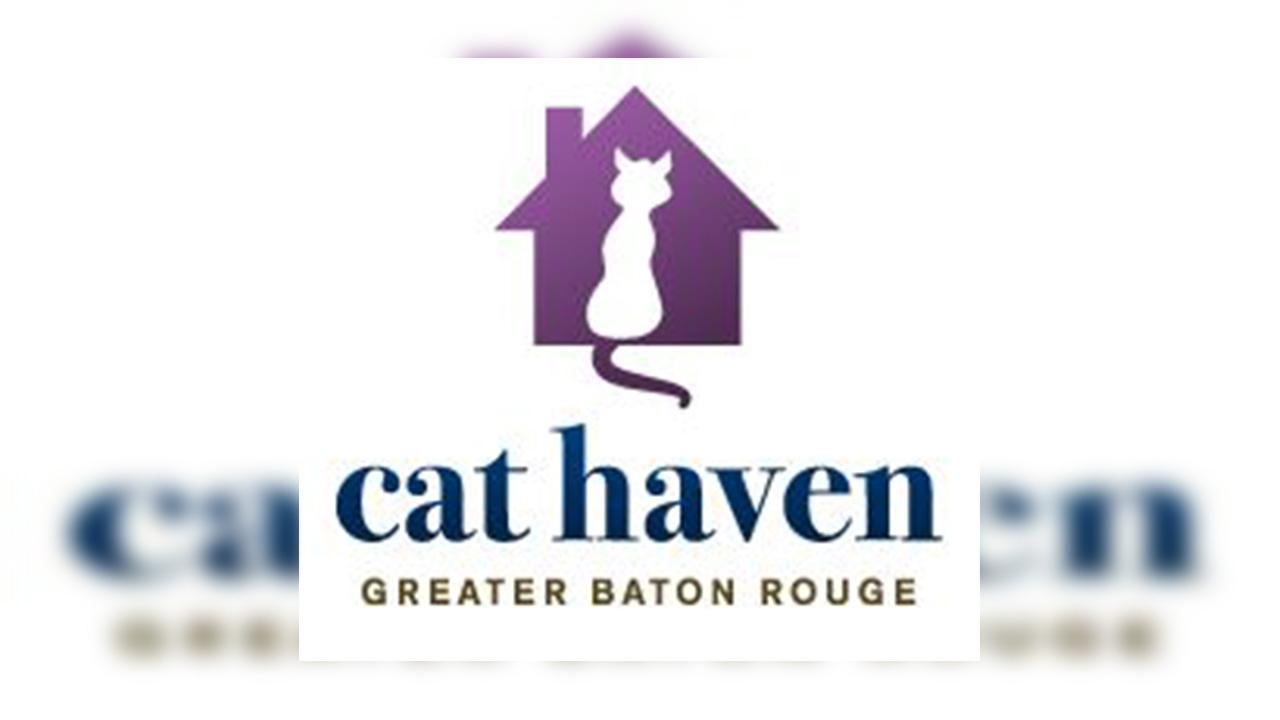 Cat Haven 5_1552084031088.JPG.jpg