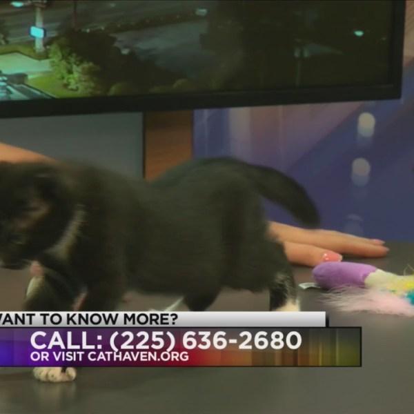 Cat Haven: Meet Dustie and Dash