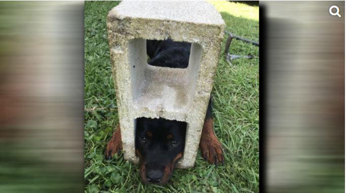 Dog Cinder Block_1556041077753.JPG.jpg