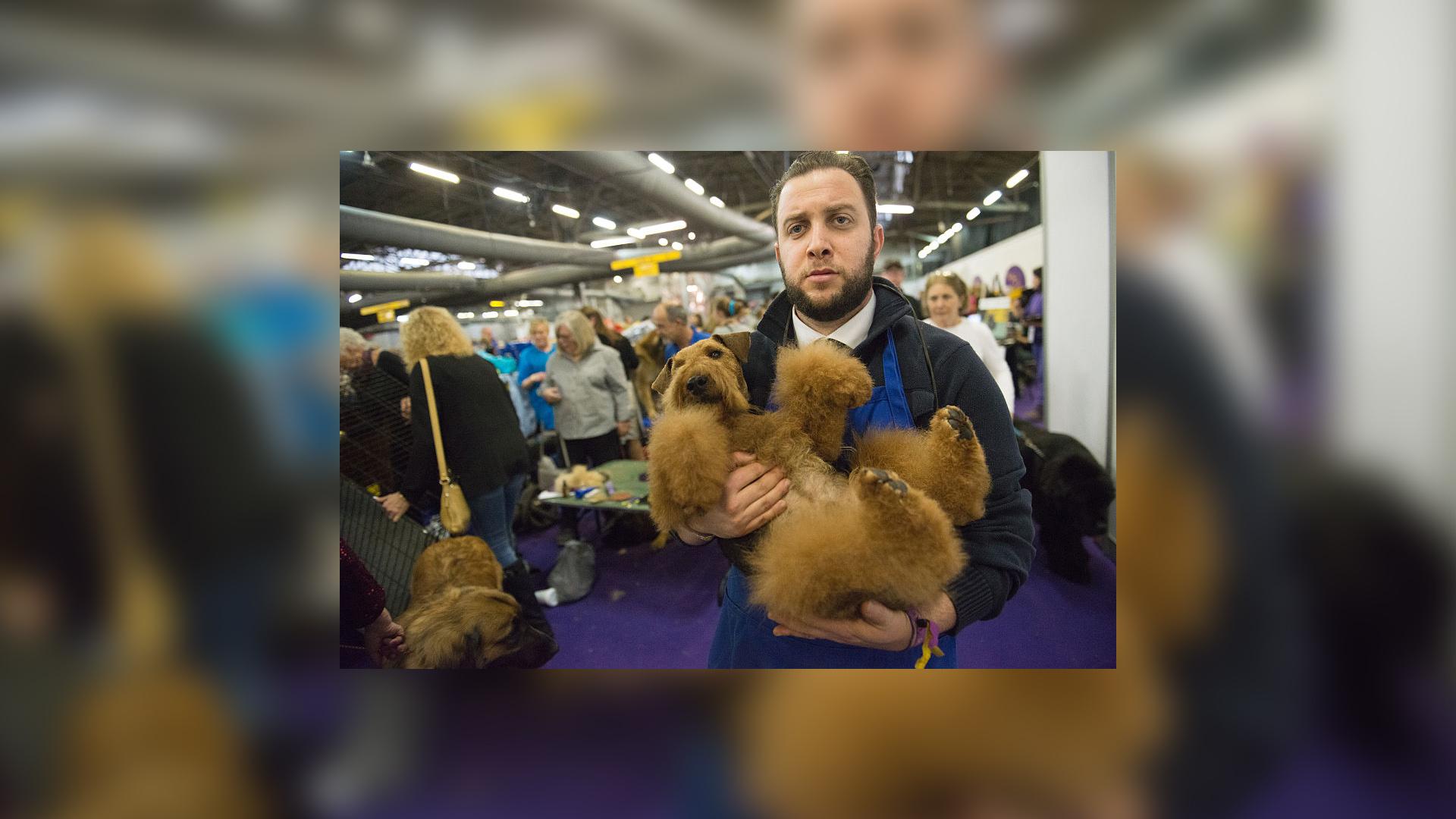 Dog grooming Getty_1555420901492.jpg.jpg