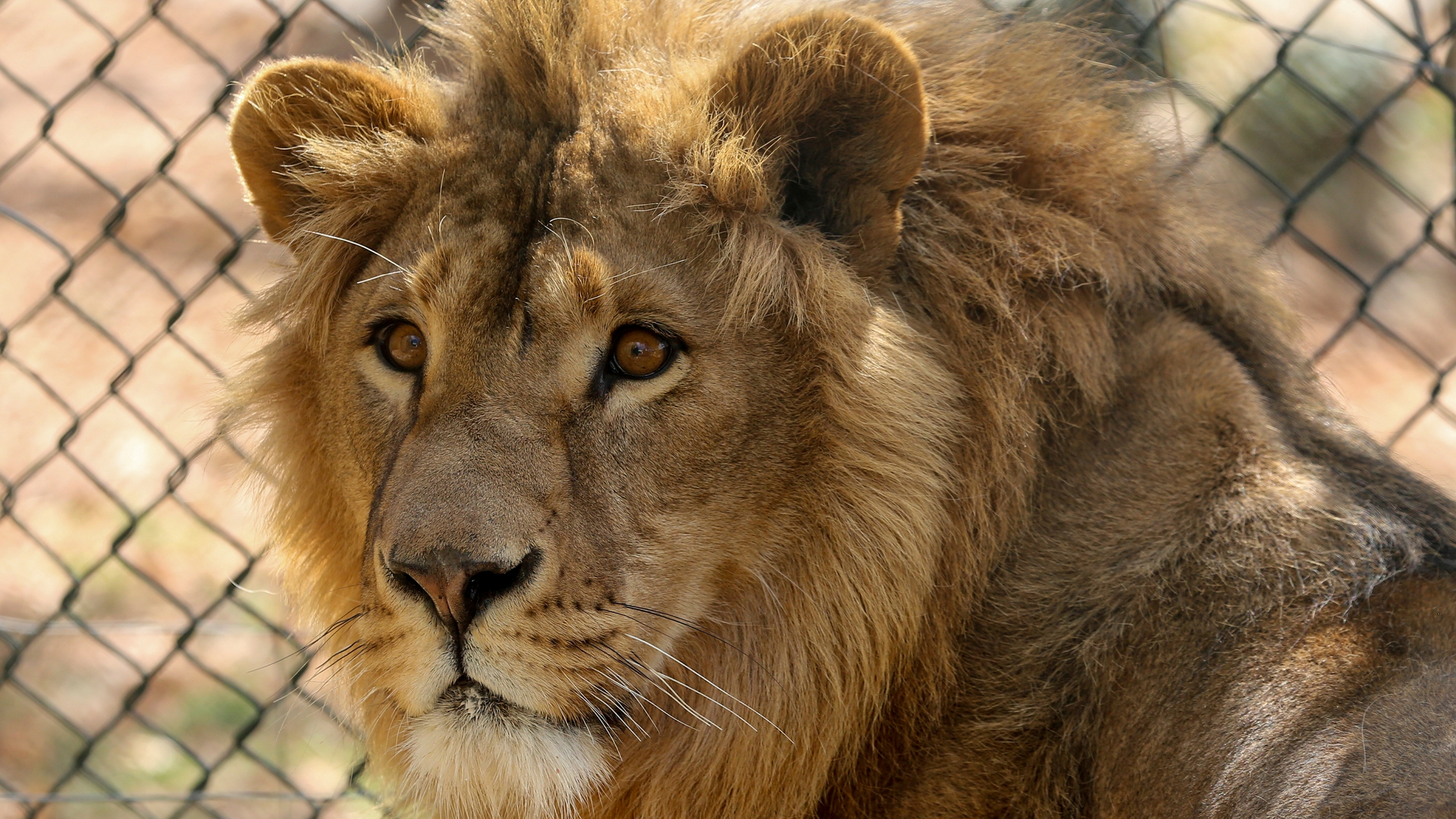 Jordan Lions Rescued_1558125008501