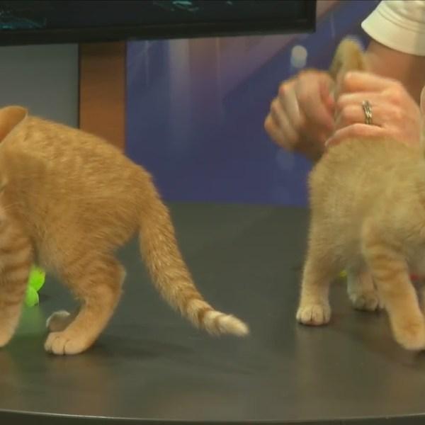 Cat Haven: Meet Hansel and Gretel