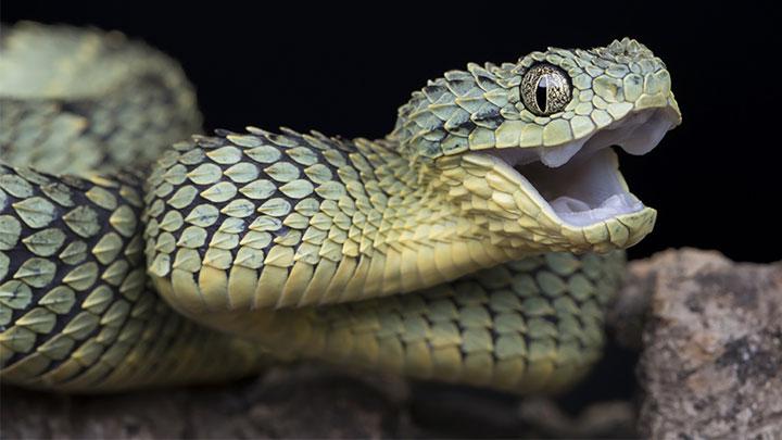 snake_1558482697609.jpg