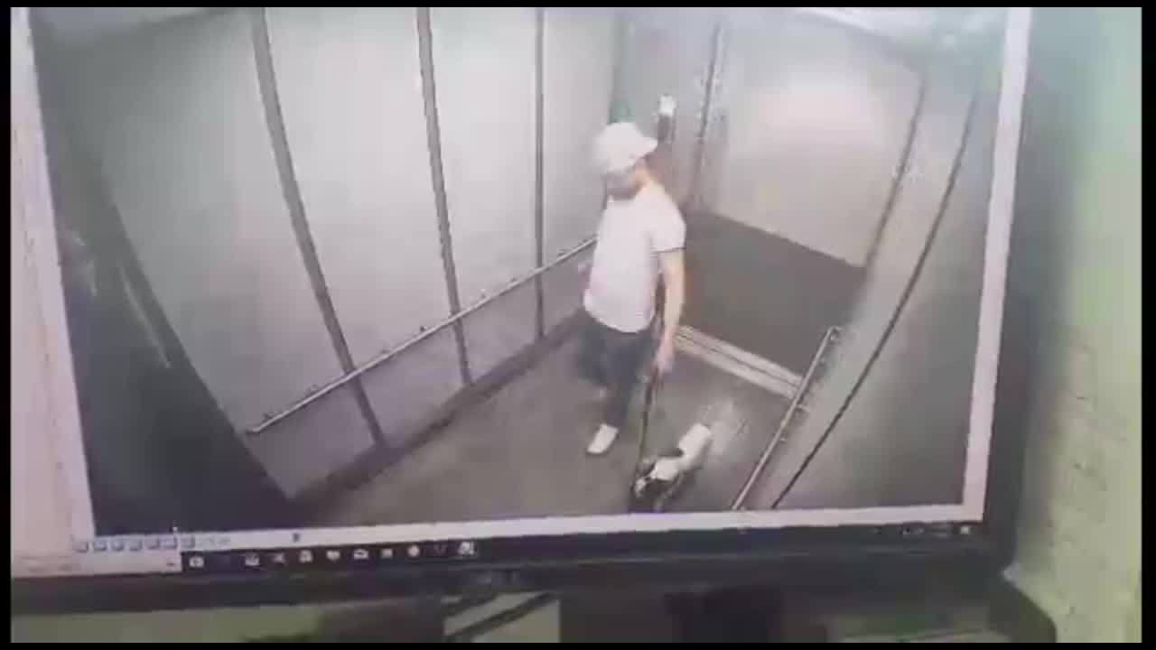 Man_attacks_dog_in_elevator_1_20190612211127-873703986