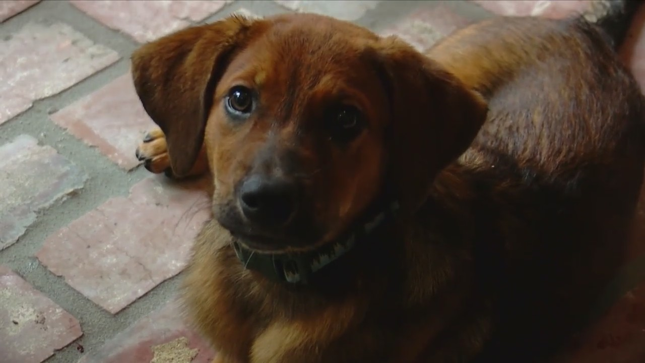 Clear The Shelters: The story behind Dante's Hope Animal